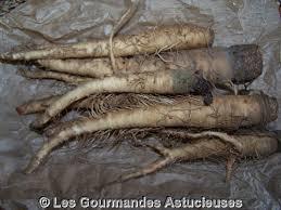 comment cuisiner les salsifis les gourmandes astucieuses cuisine végétarienne bio saine et