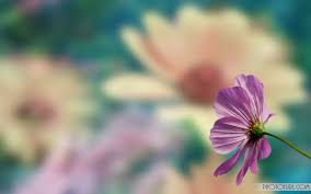 Flower Screen Backgrounds - animated flower backgrounds clipart collection
