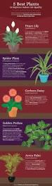Indoor Plant For Office Desk Office Design Perfect Office Plants Perfect Office Plants