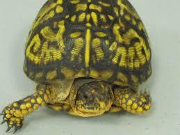 cedar bog field guide reptiles