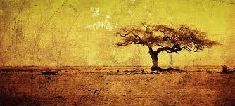grunge vintage tree picture cover timelinecoverbanner