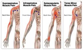 Rotator Cuff Injury From Bench Press Shoulder Pain Archives Massage In York