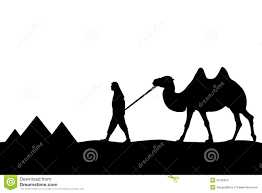 man with camel of the pyramids stock image image 35433071