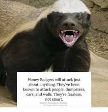 Meme Honey Badger - honey badgers will attack just about anything they ve been known to