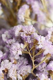 lavender statice flowers 17in