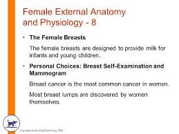 Female Breast Anatomy And Physiology Copyright Atomic Dog Publishing 2004 Chapter Three Female Anatomy