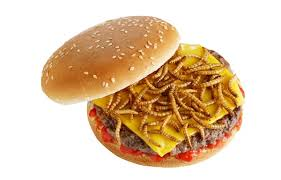 insecte cuisine speed burger propose une recette aux insectes pour