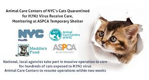 Cats Resume Animal Care Centers Of Nyc U0027s Cats Quarantined For H7n2 Virus