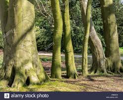 thick and thin sunlit green tree trunks abstract stock photo