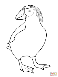 puffin coloring page tufted puffin coloring page free printable