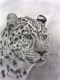 716 best drawing animals images on pinterest drawing animals