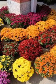 47 best javelina resistant plants images on pinterest flowers