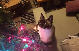 every year my cat forgets what a christmas tree is and re