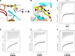 structural basis of nucleoside and nucleoside drug selectivity by