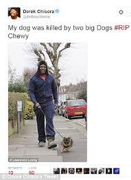 boxer dog kills man alsatians belonging to property developer worth 325million are