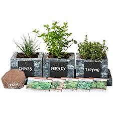 Indoor Herbal Garden Amazon Com Chia Gourmet Herb Garden Plant Germination Kits