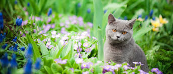 How To Keep Cats Out Of Your Backyard 5 Ways To Keep Cats Out Of Your Garden Premier Tech Home And Garden