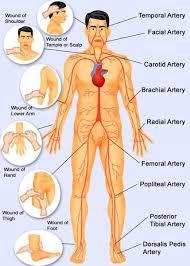 Right Side Human Anatomy Human Body Pressure Points Pressure Points Body Pressure Points
