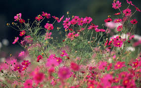 the flowers of summer at summer flowers wallpapers top hdq summer flowers images