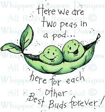 two peas in a pod picture frame two peas in a pod friendship rubber sts