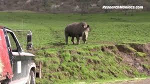 Oregon wildlife tours images Wildlife safari in winston oregon jpg