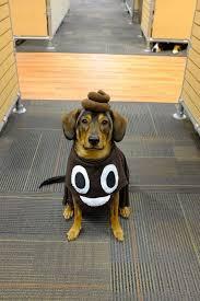 Spirit Halloween Pet Costumes 20 Dog Halloween Ideas Signing Dog