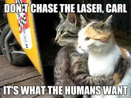 Laser Meme - don t chase the laser carl cat meme cat planet cat planet