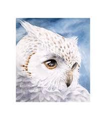 wisdomoriginal owl watercolor paintingowl head by kuroninjin my