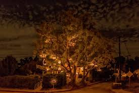 tree chandelier the chandelier tree of silver lake los angeles surfdog