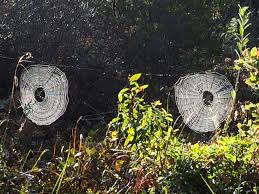 a spider and spider webs for you today on halloween u2013 mendonoma