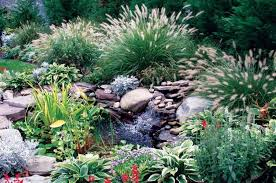 garden with pond and ornamental grasses ornamental grasses can
