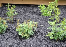 Low Maintenance Plants And Flowers - create a low maintenance flower bed our front yard progress