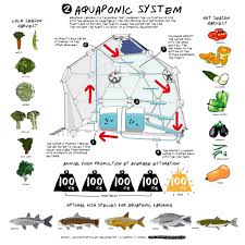 gal diy backyard aquaponics system picture with marvelous backyard