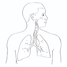 human body systems coloring pages ecolorings throughout