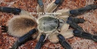 jr s invertebrates current availability jr s invertebrates