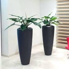 plantes bureau plante bureau bacs a plantes plantes de bureau plante pour bureau