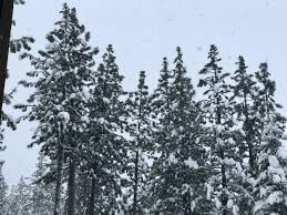 photos of snow lake tahoe weather winter storm could bring 3 6 inches of snow