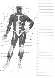 Full Body Muscle Anatomy Muscle Games Anatomy Anatomy Games Real Bodywork Human Anatomy