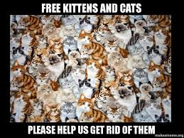 Make A Meme For Free - free kittens and cats please help us get rid of them make a meme