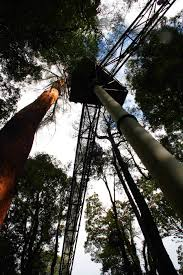 sydney the hills treetops sydney otway fly treetop adventures victoria