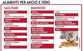 alimentazione casalinga gatto cibo per cani e gatti casalingo o industriale quattro ze