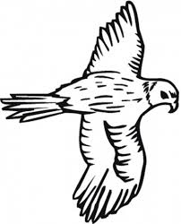 standing falcon bird coloring pages animal coloring pages of