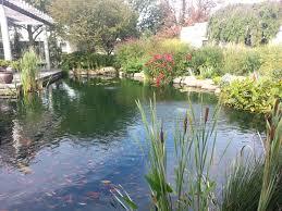 file green wood cemetery tranquility garden koi pond jpg