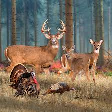 deer art by dale kunkel official site