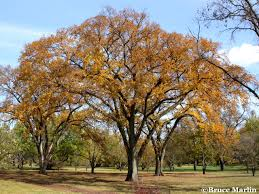 tree encyclopedia american insects spiders