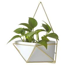succulent wall geometric hanging white gold project 62 target