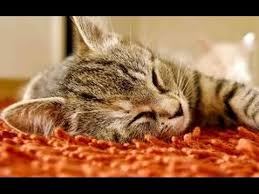 How To Comfort A Cat In Heat 2 Hours Of Cat Sleeping Music Relaxing Music For Cats 2 Hora