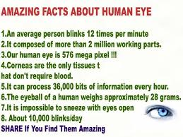 best 25 facts about ideas on eye facts