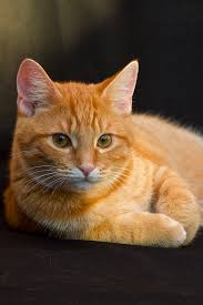 Pretty Orange Untitled Cat Cat Cat And Eye