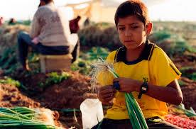 mexican child labor